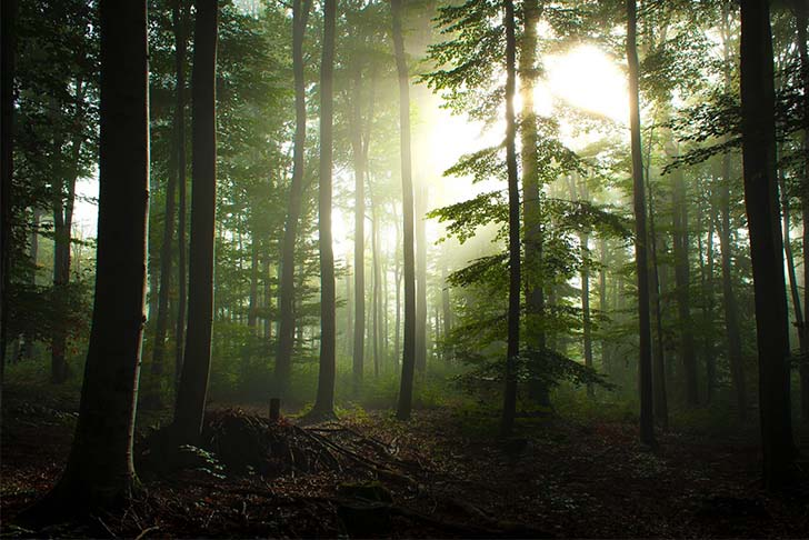 10-most-beautiful-forests-in-the-world_4