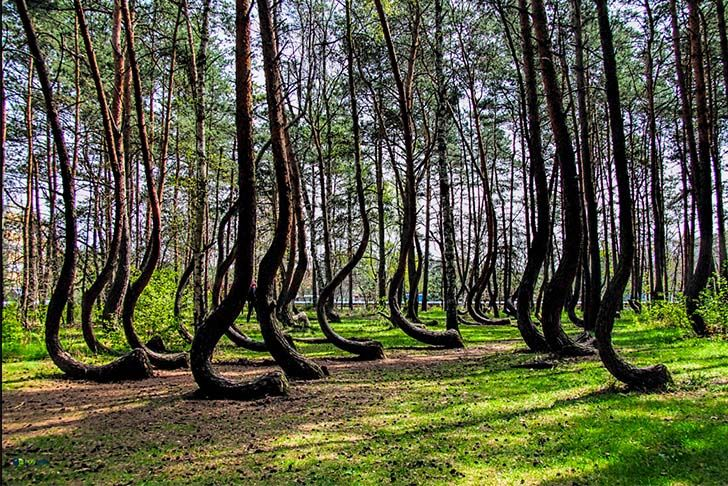 10-most-beautiful-forests-in-the-world_5