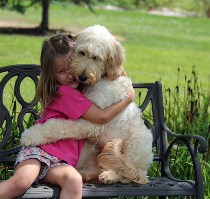 10-photos-that-show-that-dogs-love-their-family_1