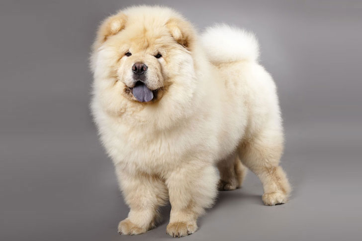 10-popular-but-dangerous-dog-breeds_2