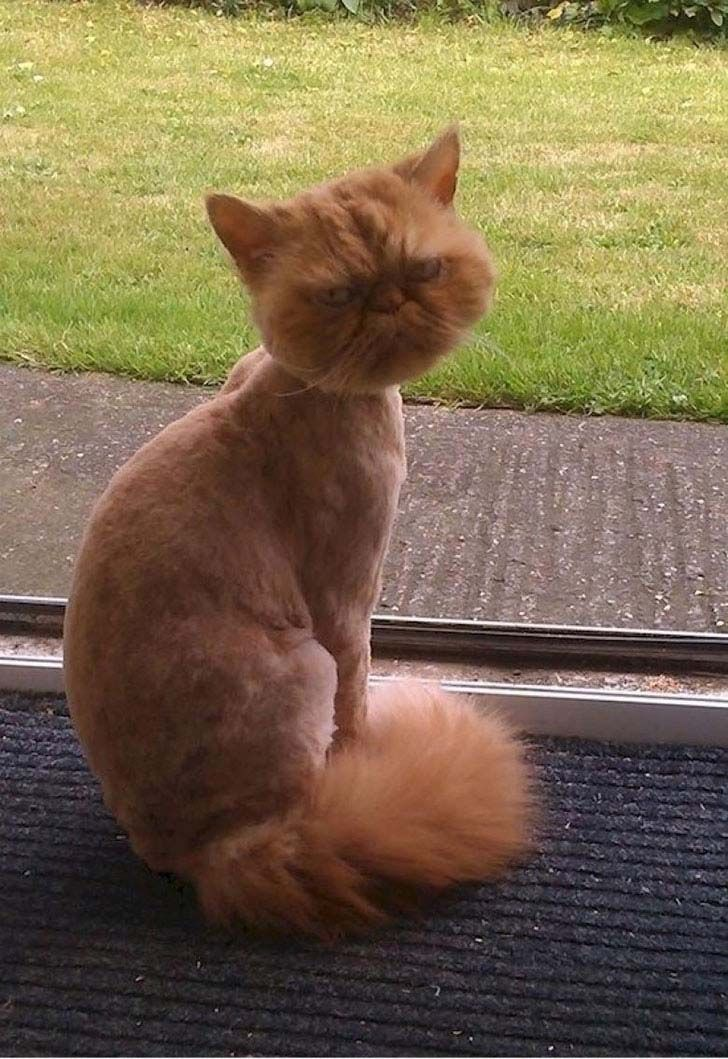 15-animals-who-hate-their-owners-for-their-new-haircut_14