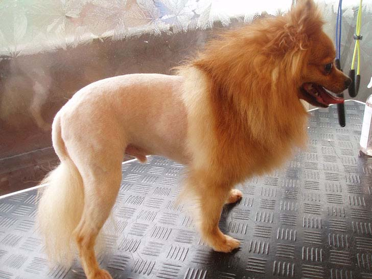 15-animals-who-hate-their-owners-for-their-new-haircut_8