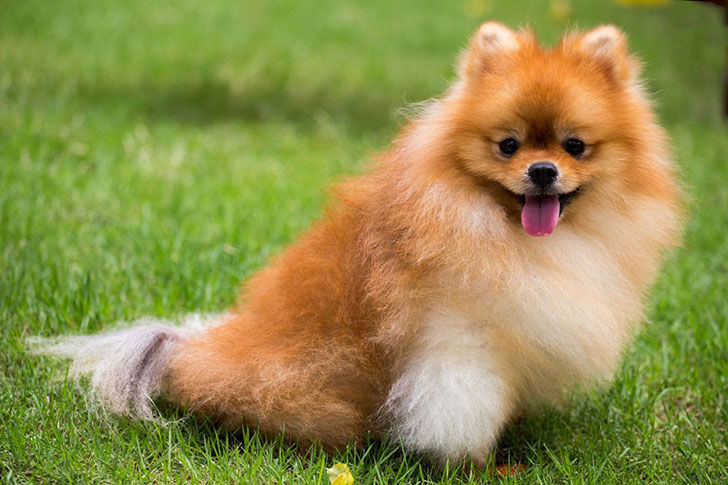 15-best-dog-breeds-for-seniors_1