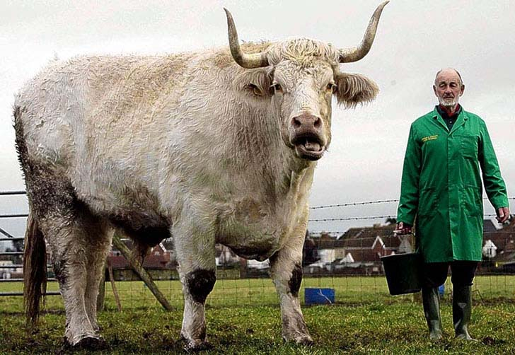 15 Extremely Giant Animals That You Wouldn't Believe ...