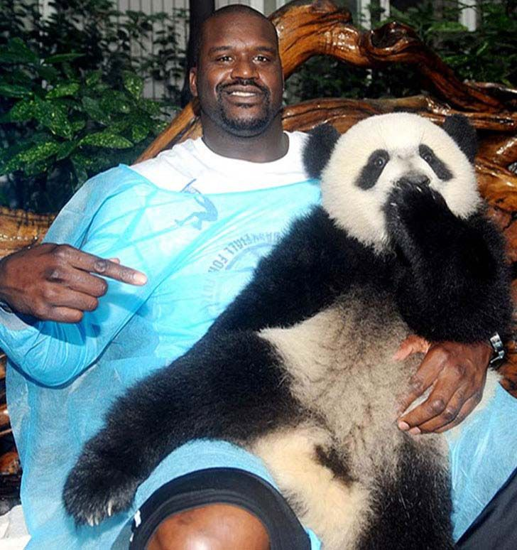 15-times-shaq-made-things-look-really-small_6