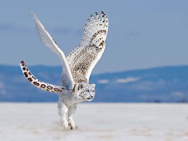 17-imaginative-photoshopped-animals-hybrids-that-will-take-your-breath-away_14