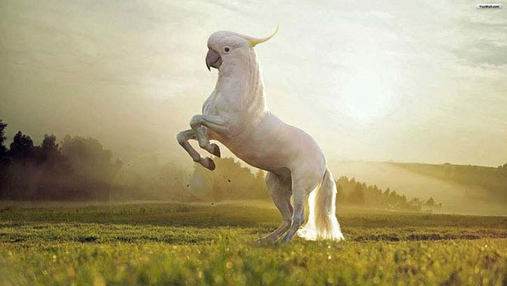 17-imaginative-photoshopped-animals-hybrids-that-will-take-your-breath-away_15