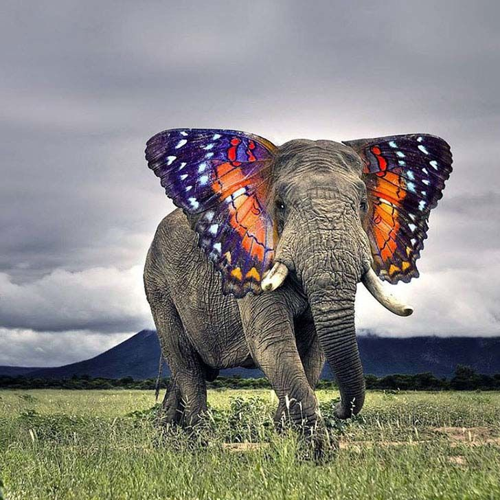 17-imaginative-photoshopped-animals-hybrids-that-will-take-your-breath-away_5