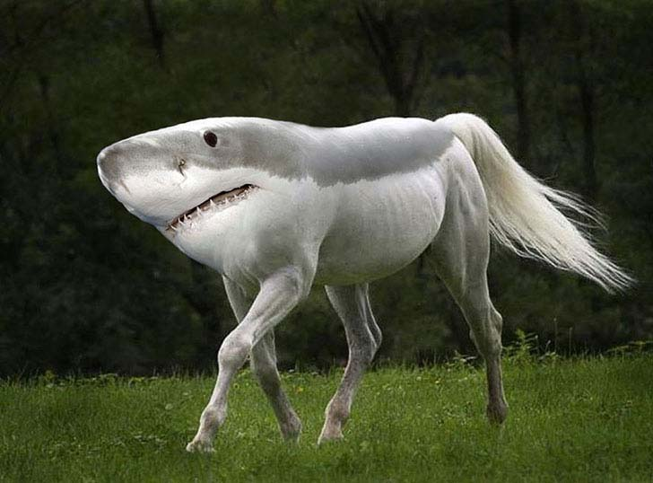 17-imaginative-photoshopped-animals-hybrids-that-will-take-your-breath-away_6