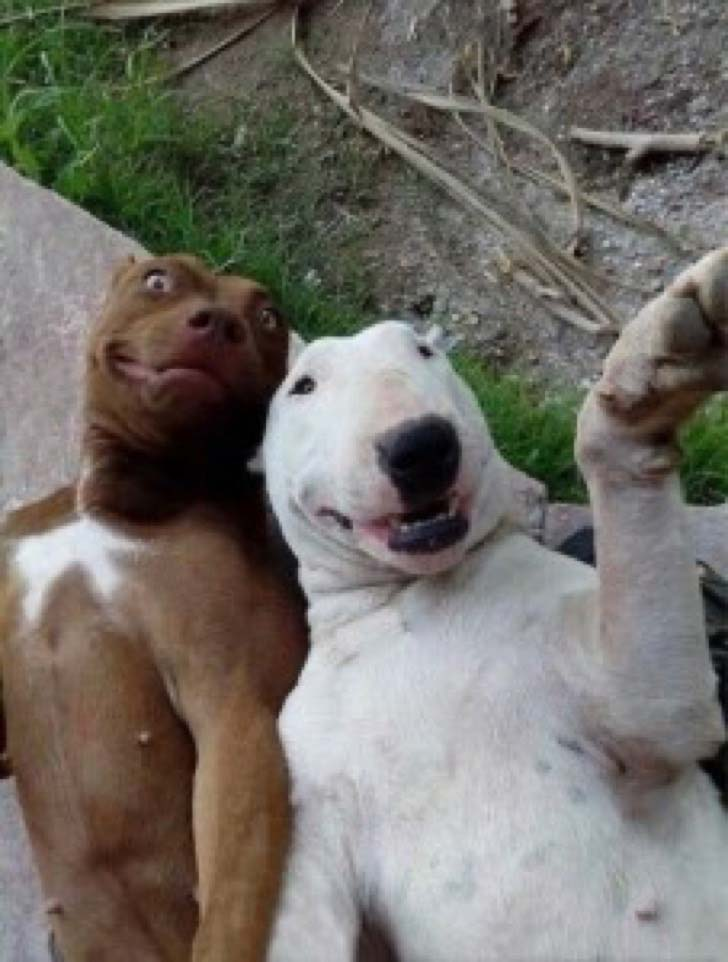 25-dogs-who-are-more-derpy-than-you-can-imagine_17