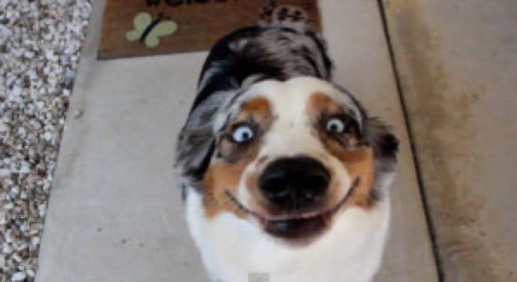 25-dogs-who-are-more-derpy-than-you-can-imagine_20