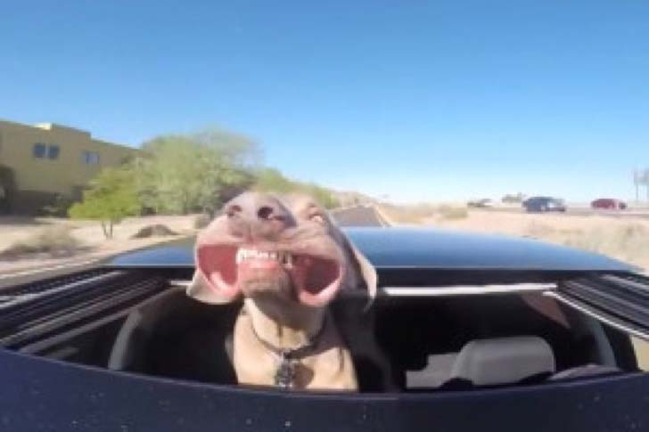 25-dogs-who-are-more-derpy-than-you-can-imagine_25