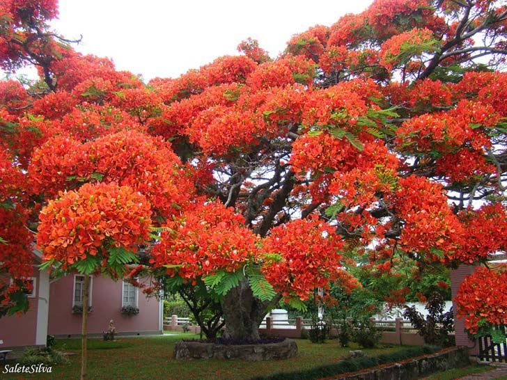 26-of-the-most-magnificent-trees-in-the-world_11