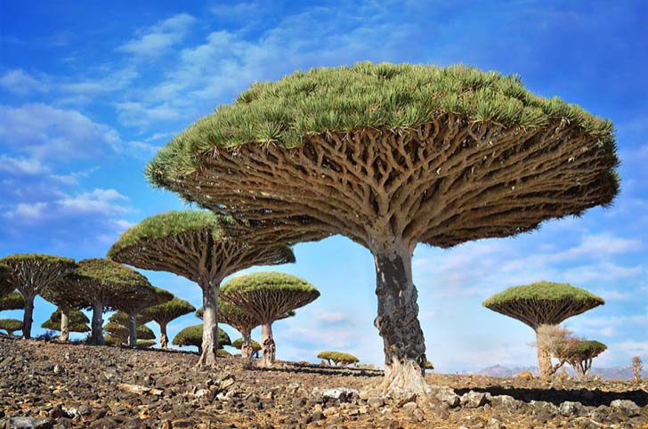 26-of-the-most-magnificent-trees-in-the-world_12