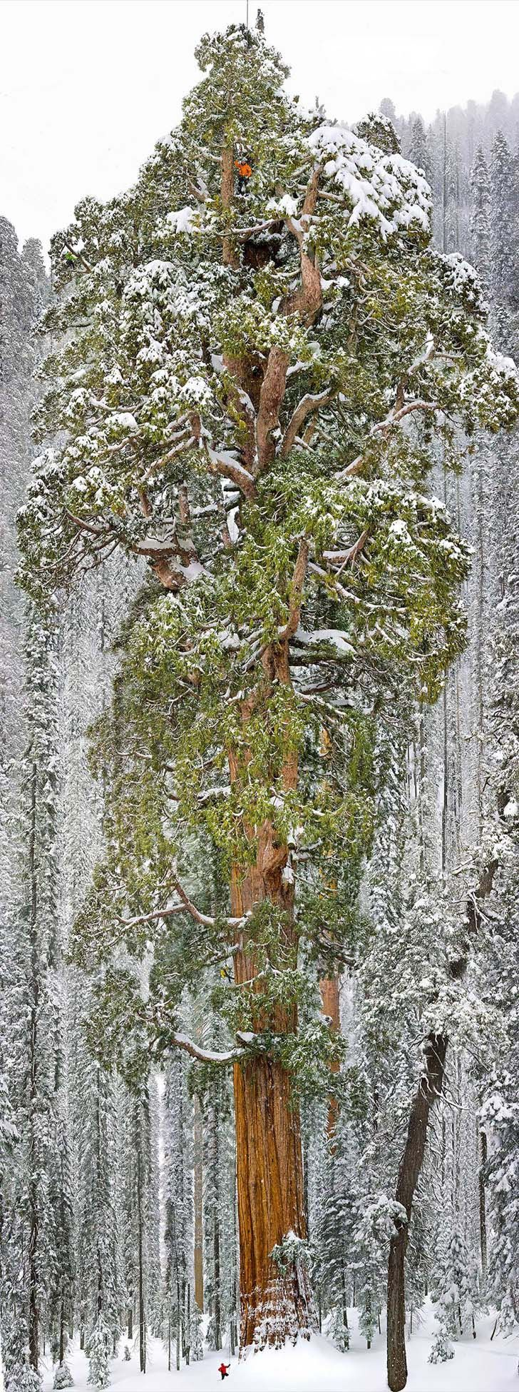 26-of-the-most-magnificent-trees-in-the-world_13