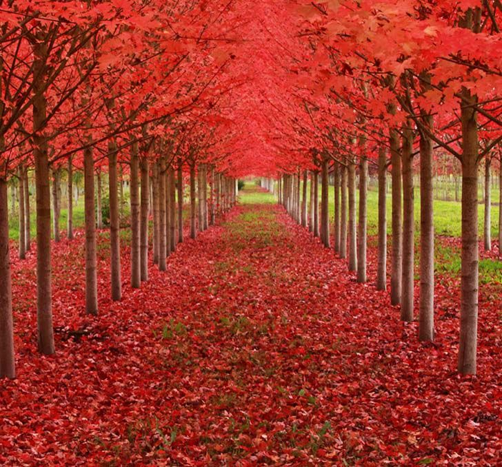 26-of-the-most-magnificent-trees-in-the-world_14