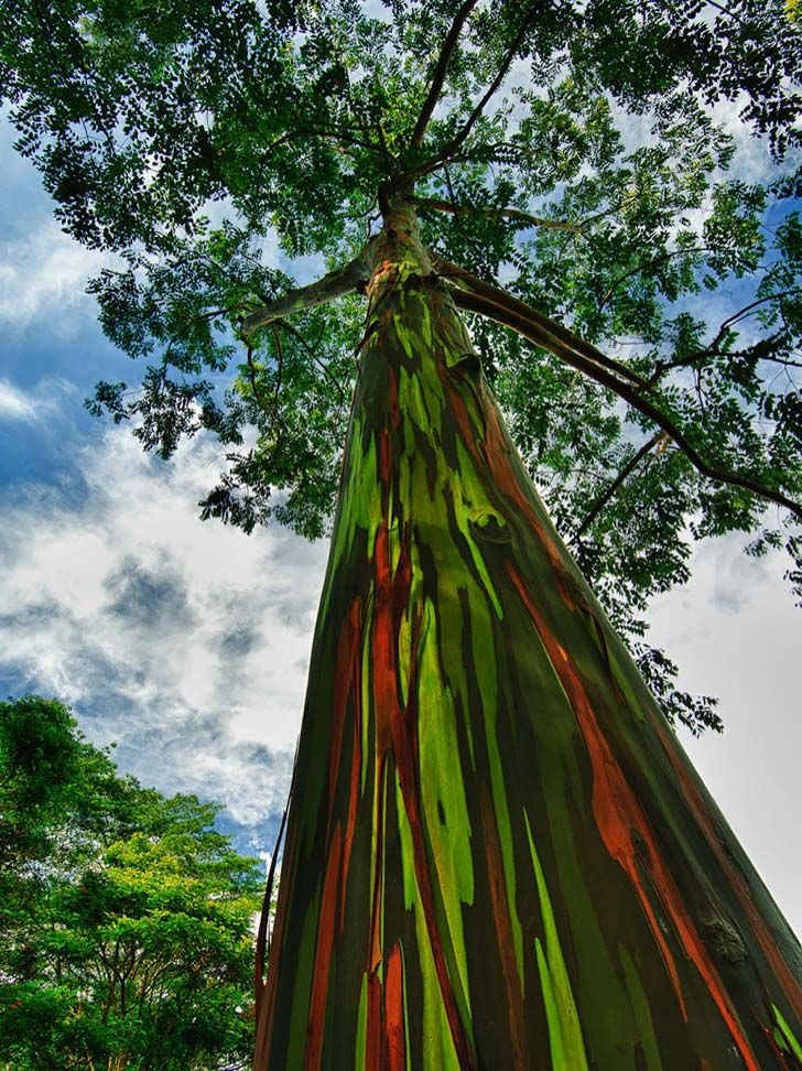 26-of-the-most-magnificent-trees-in-the-world_15