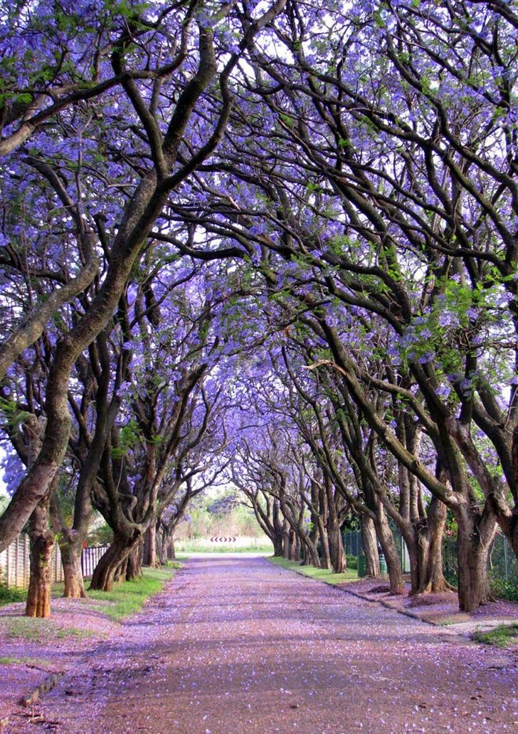 26-of-the-most-magnificent-trees-in-the-world_16