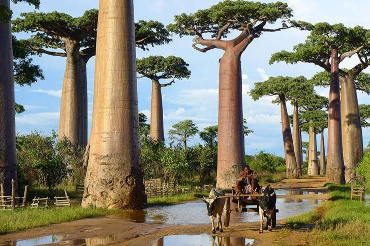 26-of-the-most-magnificent-trees-in-the-world_18