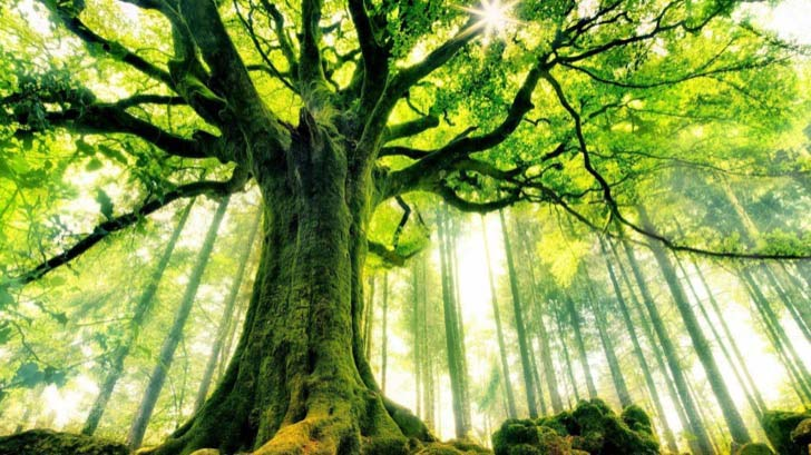 26-of-the-most-magnificent-trees-in-the-world_21