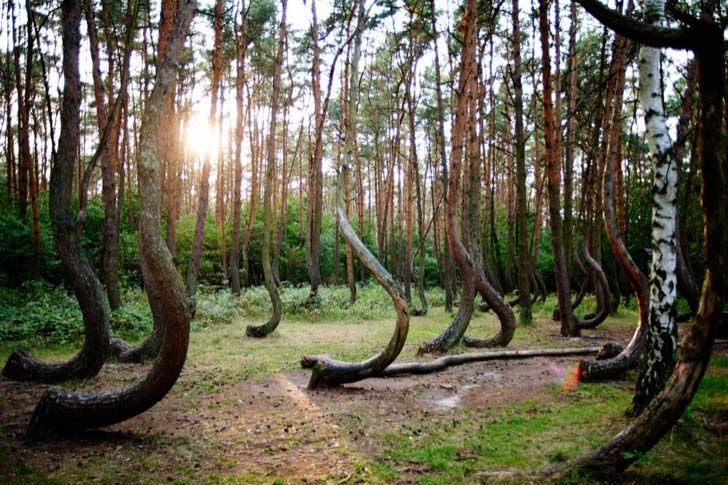 26-of-the-most-magnificent-trees-in-the-world_24