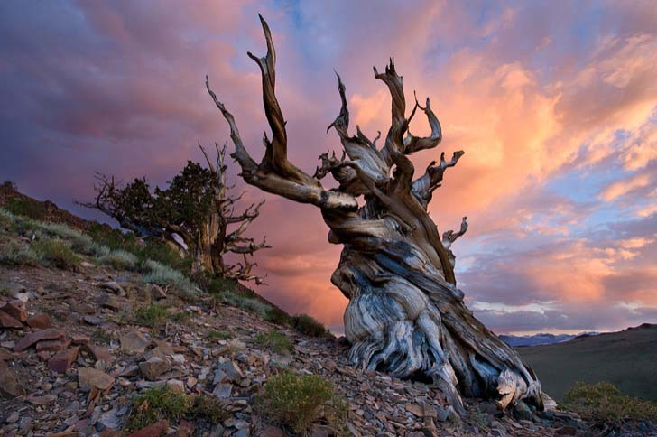 26-of-the-most-magnificent-trees-in-the-world_25