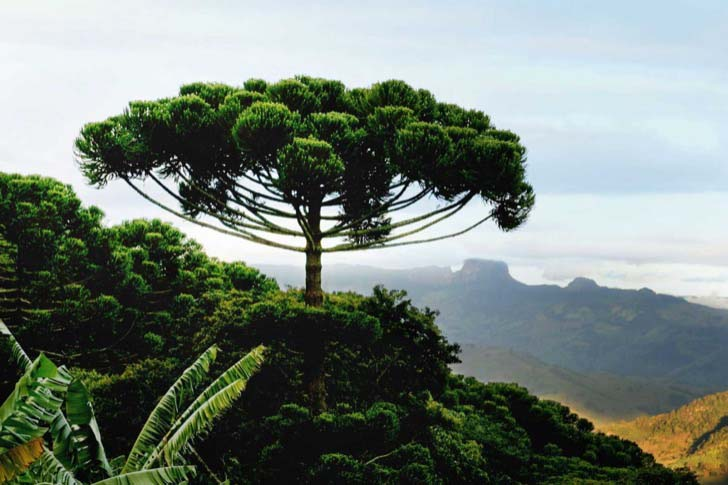 26-of-the-most-magnificent-trees-in-the-world_3