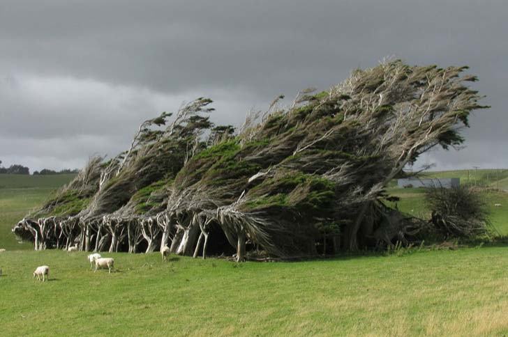 26-of-the-most-magnificent-trees-in-the-world_4