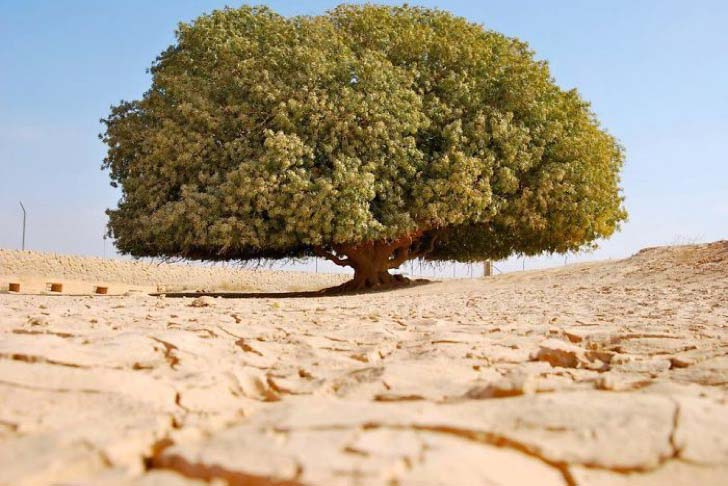26-of-the-most-magnificent-trees-in-the-world_5