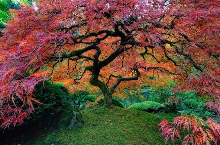 26-of-the-most-magnificent-trees-in-the-world_6