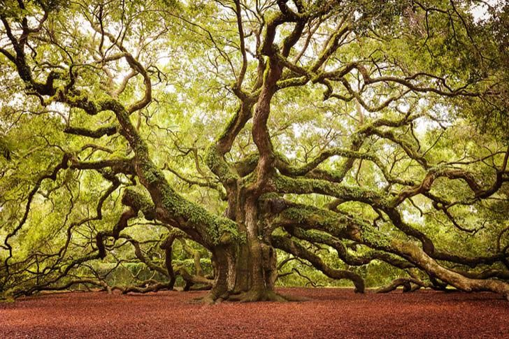 26-of-the-most-magnificent-trees-in-the-world_9