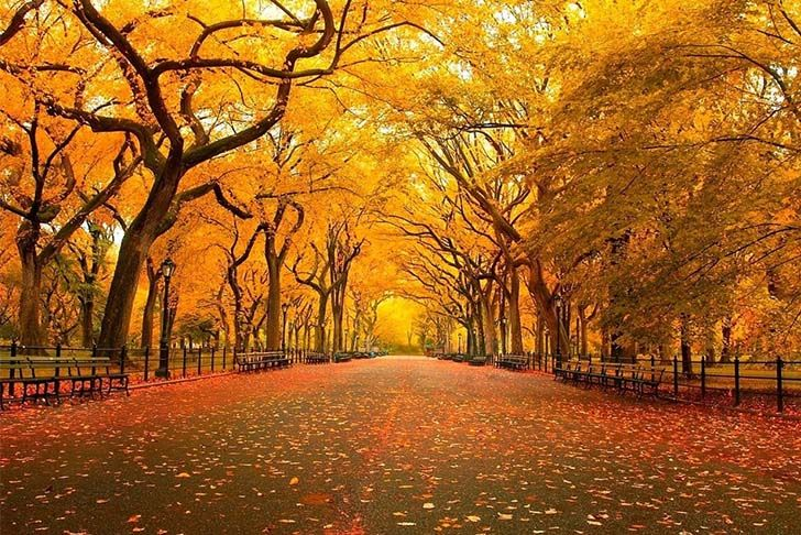 8-most-beautiful-and-famous-trees-on-the-planet-that-you-need-to-see_7