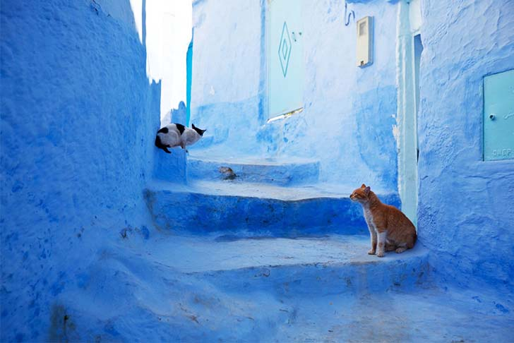 chefchaouen-the-blue-city-in-morocco_1