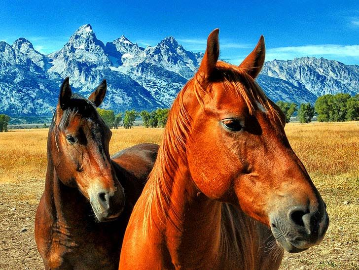 these-25-rare-and-beautiful-horses-are-like-nothing-you-have-ever-seen_1