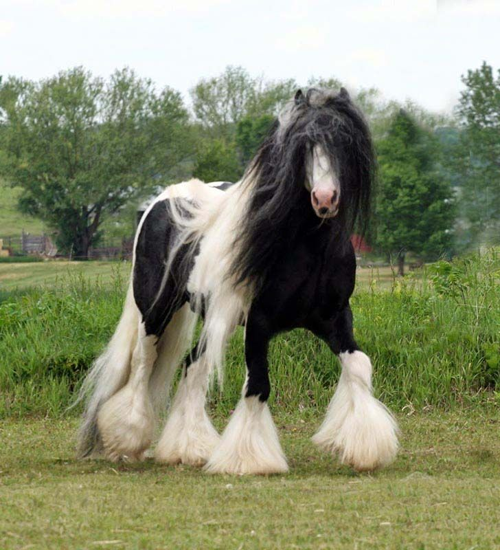 these-25-rare-and-beautiful-horses-are-like-nothing-you-have-ever-seen_11
