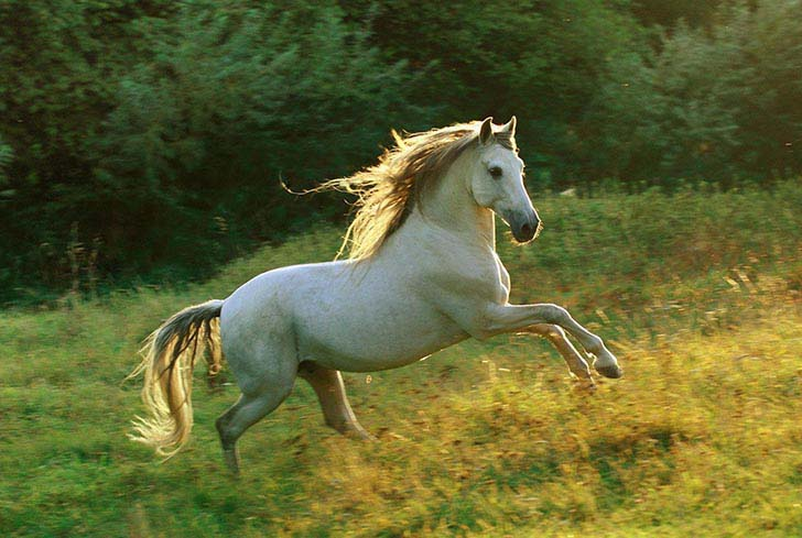these-25-rare-and-beautiful-horses-are-like-nothing-you-have-ever-seen_13