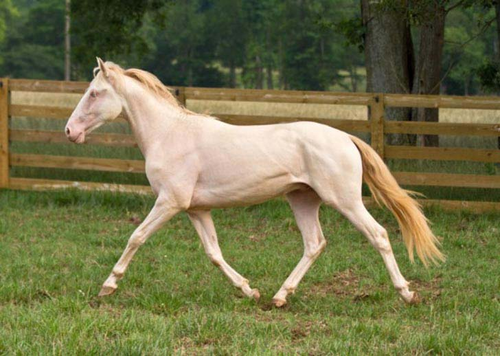 these-25-rare-and-beautiful-horses-are-like-nothing-you-have-ever-seen_15