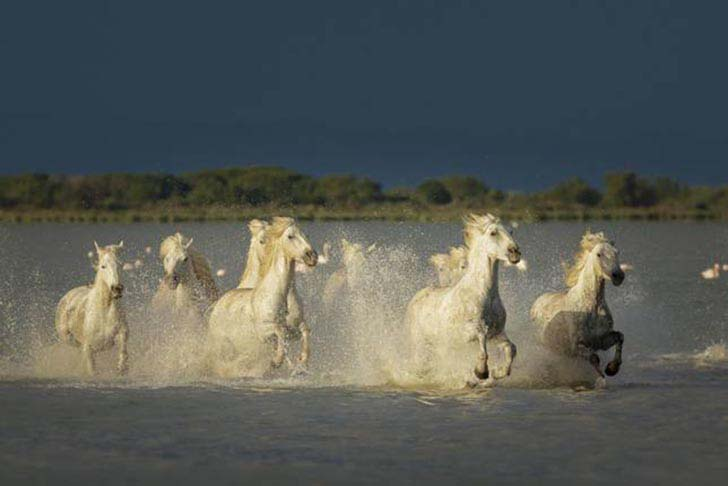 these-25-rare-and-beautiful-horses-are-like-nothing-you-have-ever-seen_17