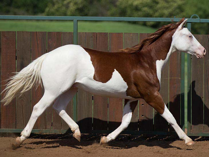 these-25-rare-and-beautiful-horses-are-like-nothing-you-have-ever-seen_18
