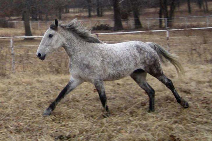 these-25-rare-and-beautiful-horses-are-like-nothing-you-have-ever-seen_19