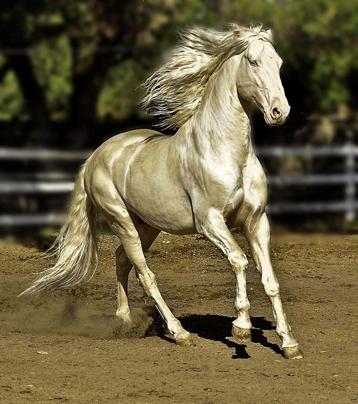 these-25-rare-and-beautiful-horses-are-like-nothing-you-have-ever-seen_2