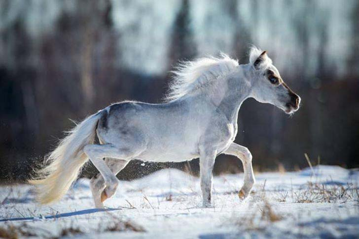 these-25-rare-and-beautiful-horses-are-like-nothing-you-have-ever-seen_21