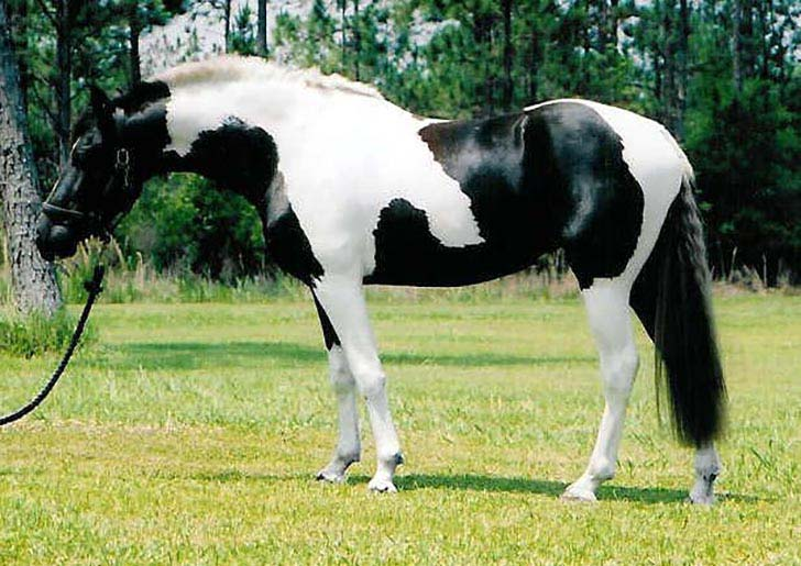 these-25-rare-and-beautiful-horses-are-like-nothing-you-have-ever-seen_23