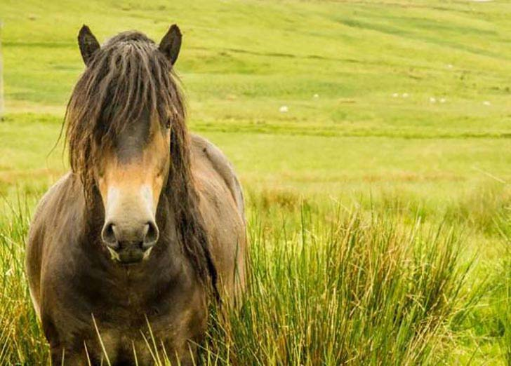 these-25-rare-and-beautiful-horses-are-like-nothing-you-have-ever-seen_25