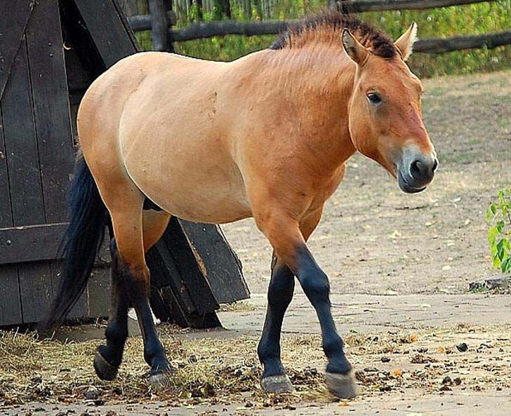 these-25-rare-and-beautiful-horses-are-like-nothing-you-have-ever-seen_26