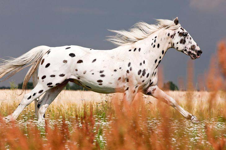 these-25-rare-and-beautiful-horses-are-like-nothing-you-have-ever-seen_3