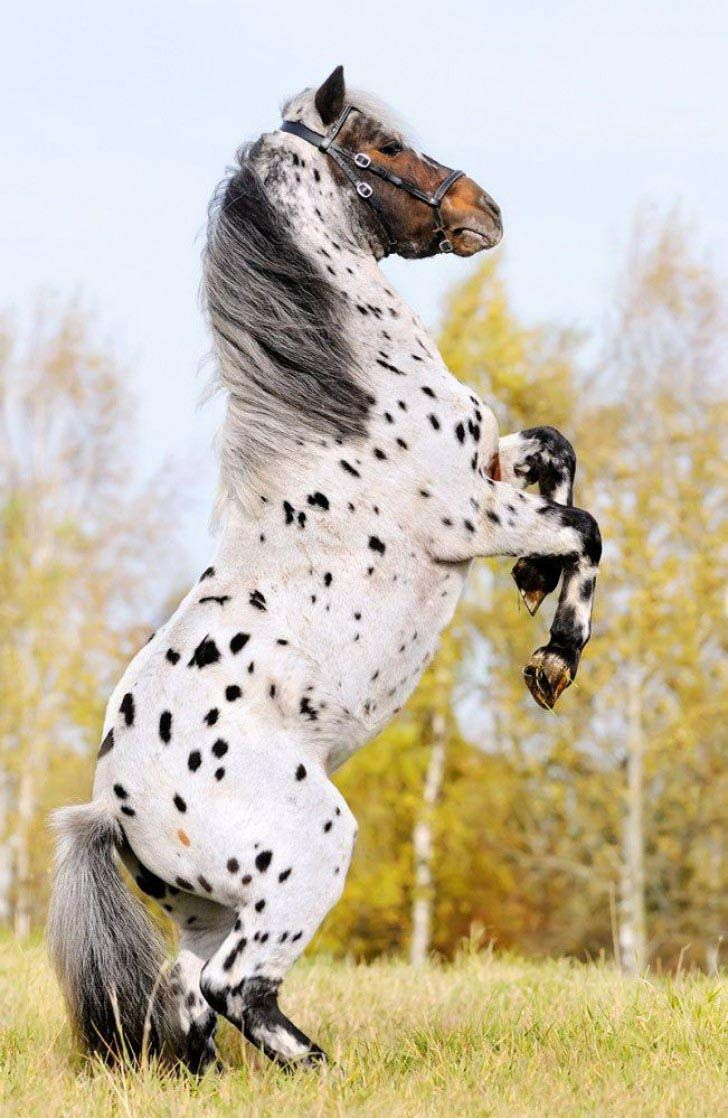 these-25-rare-and-beautiful-horses-are-like-nothing-you-have-ever-seen_6