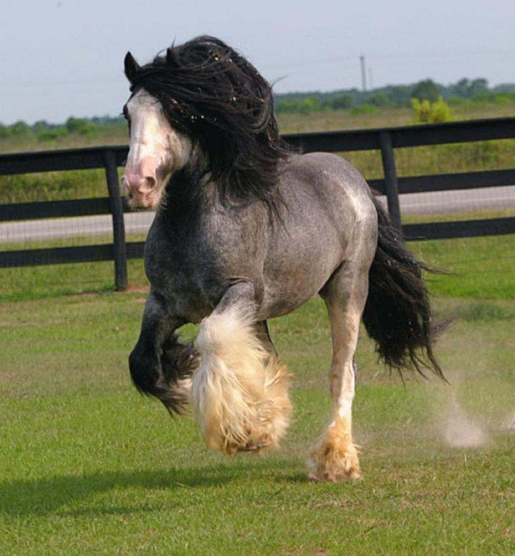 these-25-rare-and-beautiful-horses-are-like-nothing-you-have-ever-seen_7