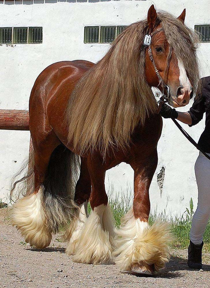 these-25-rare-and-beautiful-horses-are-like-nothing-you-have-ever-seen_9