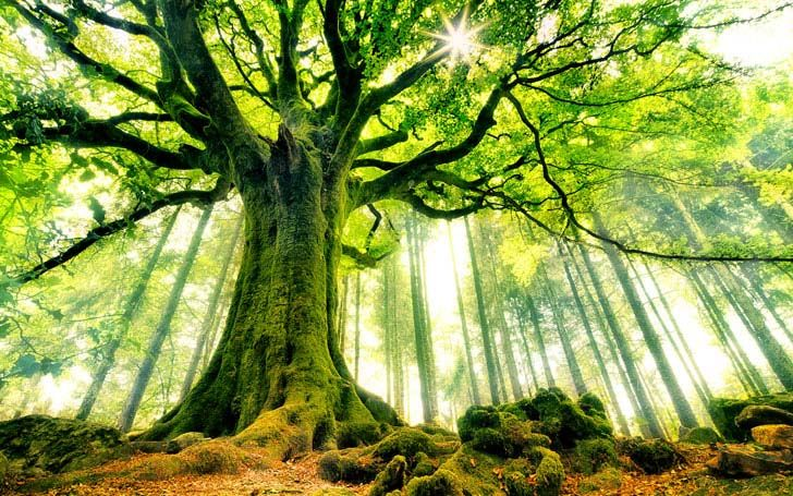 top-8-unbelievable-oldest-trees-in-the-world_1